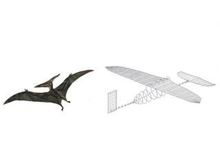 Pteroszaurusz-es-repulo(1024x768).png (pterosaurus, repülő, terv, )