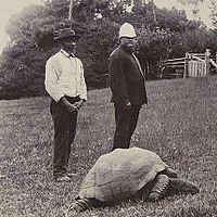 Jonathan (teknős)
