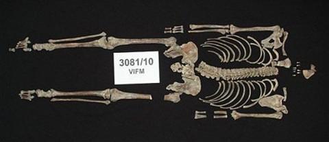 Ned Kelly csontváza (ned kelly)