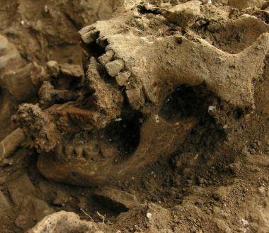 boszorkány múmia (múmia, boszorkány, )