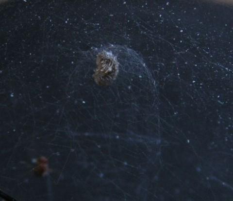 kupolaháló (pókháló)