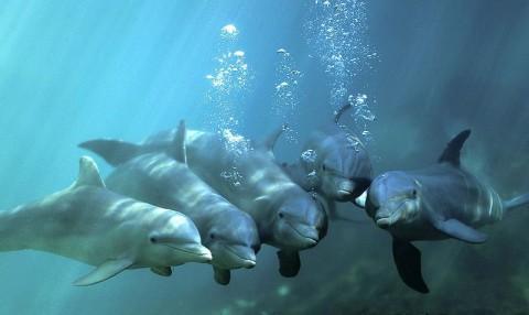 palackorrú delfinek (palackorrú delfinek)