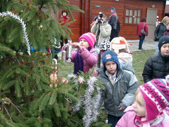 Karácsonyfa a HEROSZ állatmenhelyén (állatok karácsonyfája)