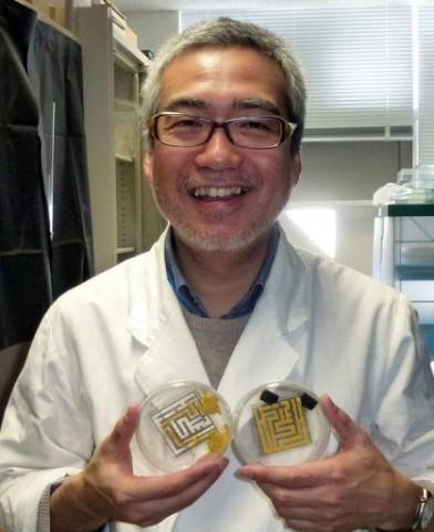 Tosijuko Nakagaki (tosijuki nakagaki)