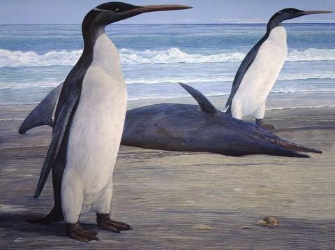 Kairuku pingvinek (pingvin, kairuku, kairuku pingvin, )