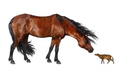 Morgan és Sifrhippus (morgan, sifrhippus, ló, lófajta, )