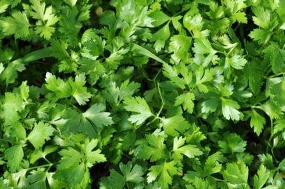Petrezselyem (zöldség, )