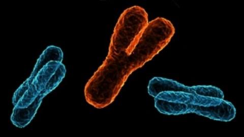 Y-kromoszóma (y-kromoszóma, kromoszóma, x-kromoszóma, )