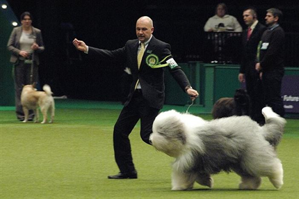 legszebb-kutya(430x286).png (legszebb kutya)