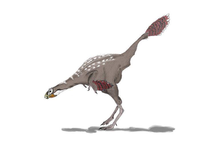 Caudipteryx (Caudipteryx, dinoszaurusz, )