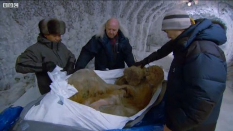 Juka, a tízezer éves mamutborjú (juka, mamut, )