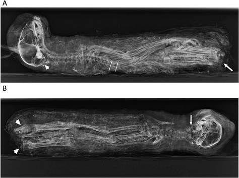 Mumifikált kismacska (macska, múmia, )