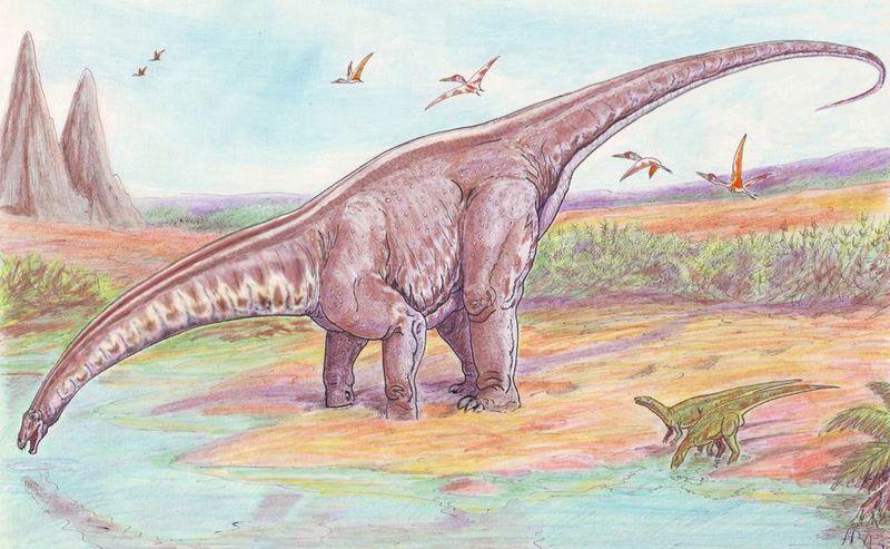 Apotasaurus (apotasaurus, brontosaurus, )