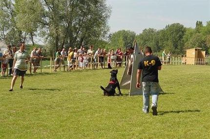 Kutyamajalis-Gyor(2)(430x286).png (Kutyamajális Győr)