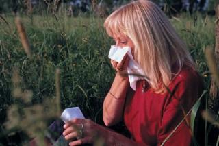 allergia (pollen)