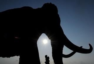mamut (mamut)