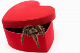 pók (pók, pókiszony, )