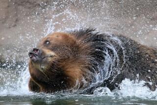 Medve (medve, )