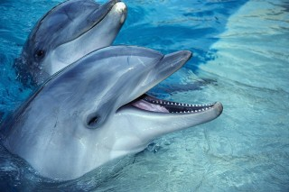 delfin (delfin, napi cuki, )