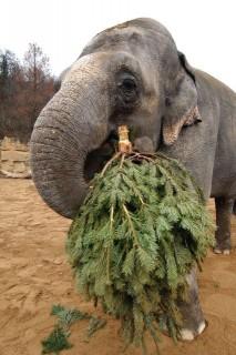 elefánt (elefánt)