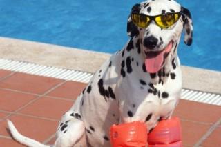 kutyameleg (kutyameleg, hőség, kánikula)