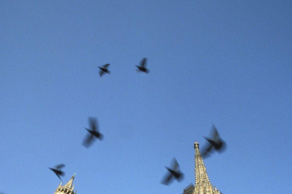 madarak (madarak, )