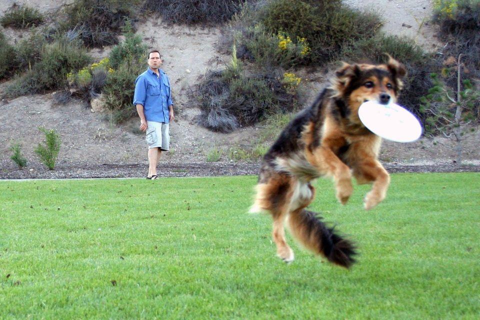 kutya-frizbi (kutya frizbivel)