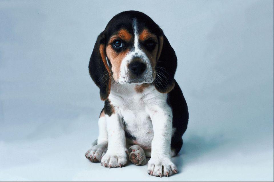 kutyus (kutya, )