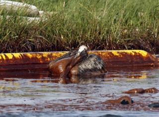 olajszennyezés (olajszennyezés)