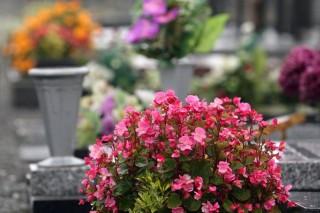 temető (temető, sír)