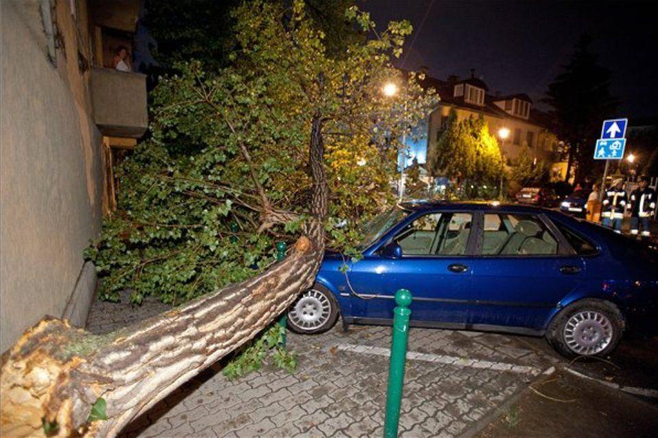 vihar (ingyenes, viharkár, kidőlt fa, )