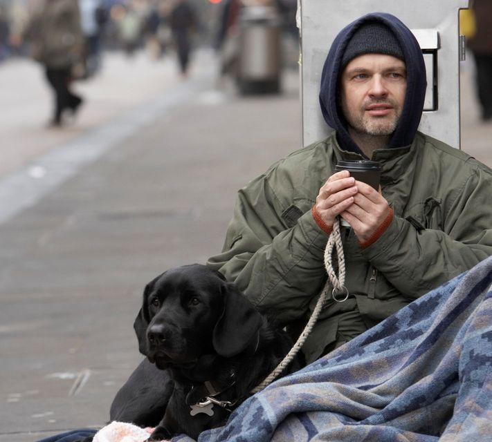 hajléktalan (hajléktalan, )