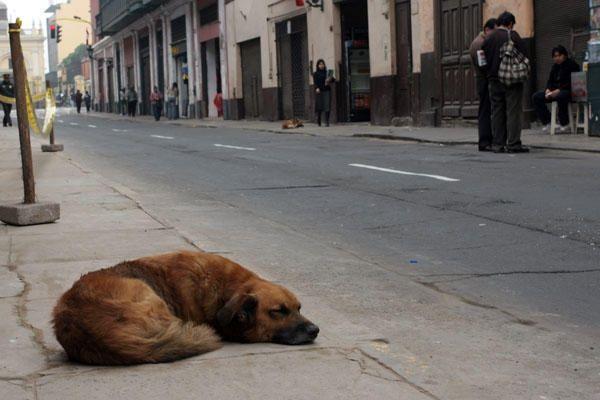 kóbor kutyák (kóbor kutyák)