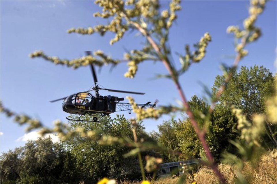 parlagfű-helikopter (ingyenes, )