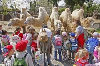 állatkert (állatkert, )