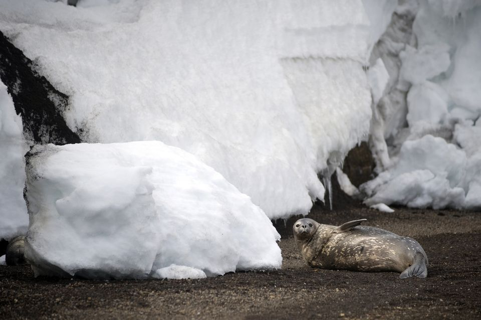 antarktisz(210x140)(1).jpg (antarktisz)