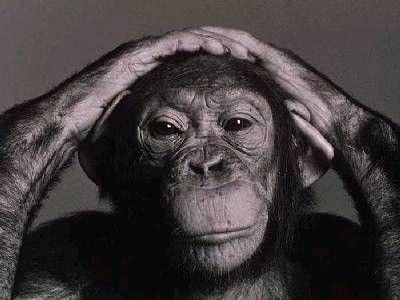 csimpánz (csimpánz)