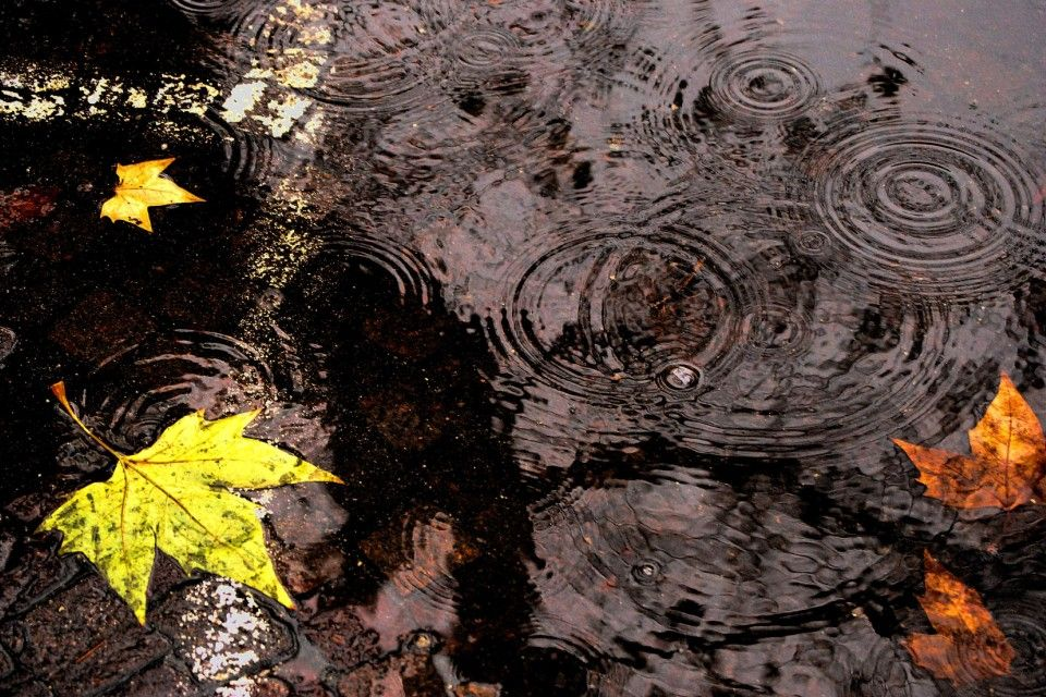 eső-ősz (ősz, őszi eső)