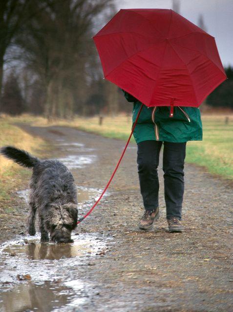 eső (eső)