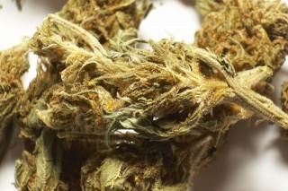 marihuana(960x640)(4).jpg (marihuána, kábítószer, drog, )
