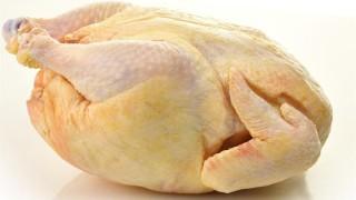 csirke (csirkehús)