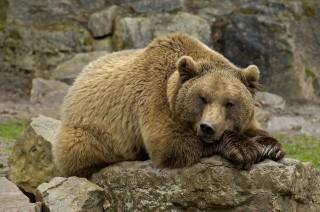 medve(960x640)(1).jpg (medve)