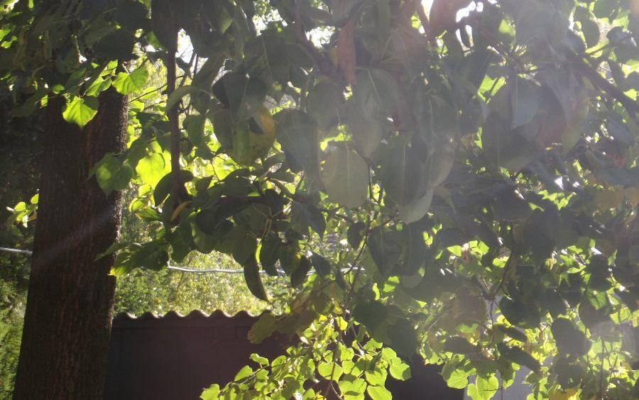 napsütés (napsütés)
