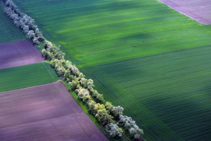 szántóföld (föld, mezőgazdaság, )