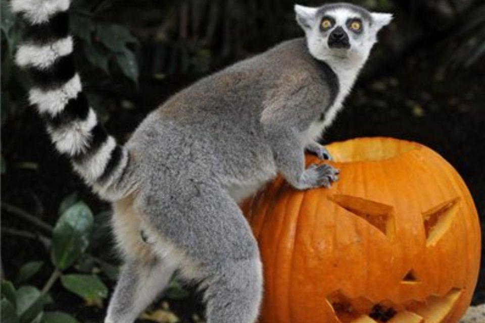 töklámpás-állatkert (ingyenes, )