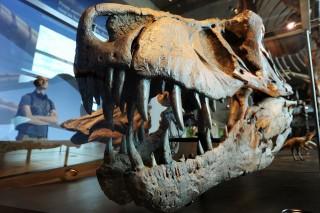 tyrannosaurus (tyrannosaurus)