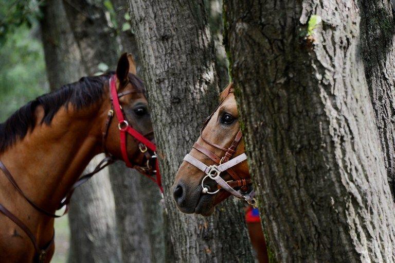 lovak (lovak, ló, karám)