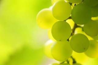 szolo(960x640)(2).jpg (szőlőtőke, szőlőlevél, szőlő, )