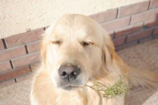 kutya (kutya, )