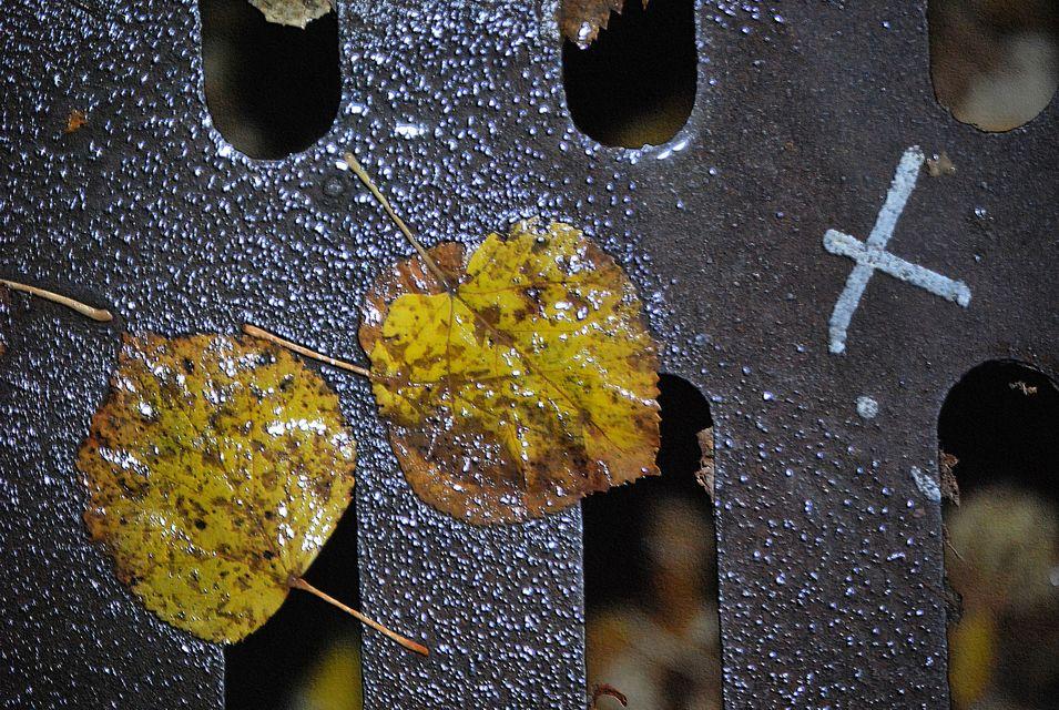 ősz (sárgult falevelek)